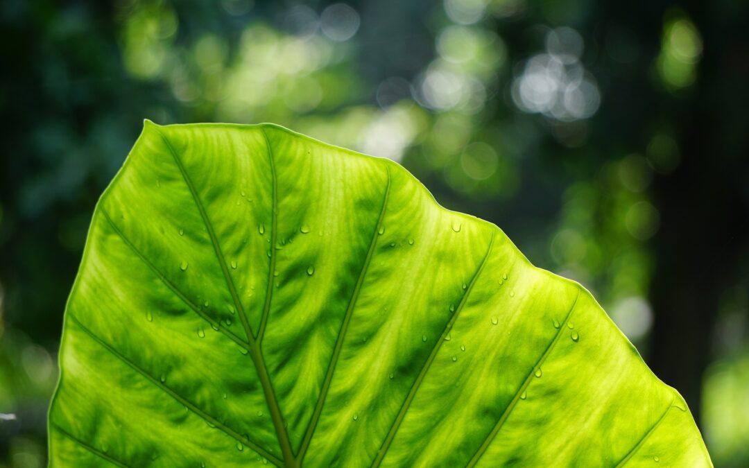 Pour un bien-être florissant des plantes