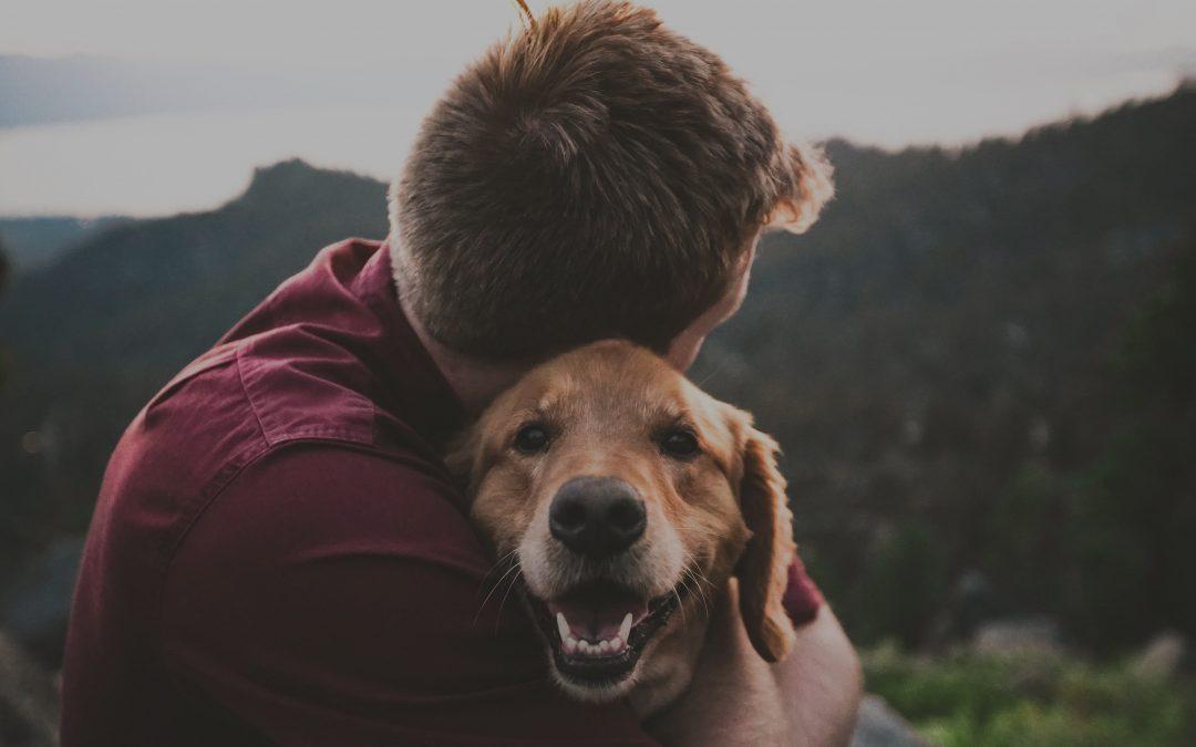 Aux petits soins de nos animaux de compagnie